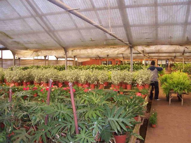 Historia leonardo wolf flores en maceta plantas de for Viveros en escobar